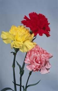 Какие цветы вы не любите?