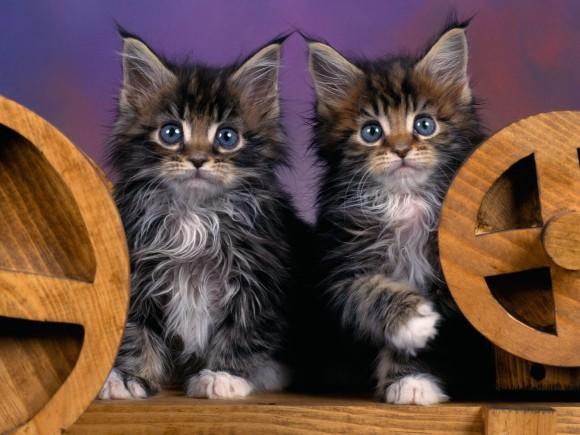 Покажите мне разные пароды котов?