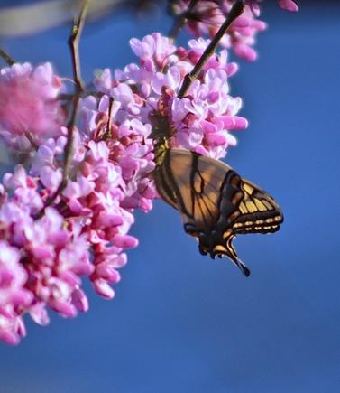 Мисс Весна 2011 кто по вашему мнению?