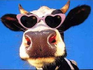 Rozā brilles..!?!