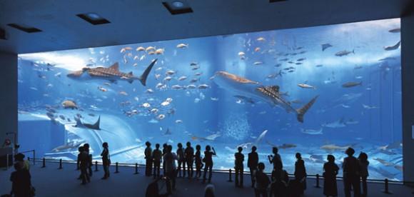 У вас есть аквариум?