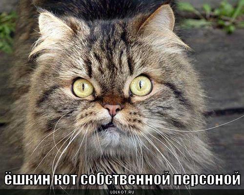 Кто такой Ёшкин-кот?