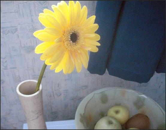 Какие цветы вы любите дарить?