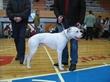 Ne amītis, bet Argentīnas dogs