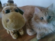 Жирафф и ТигАааРрр! Джунгли зовут! :>