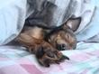 собака весь день сладкоспака ^__^