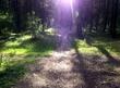 Дивный лес с мобильного :)
