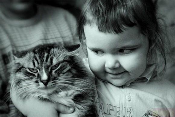 Вы за кошек или за собак?