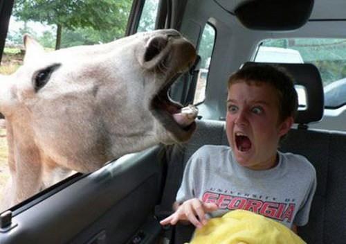 Покажите самую смешную картинку которую вы нашли в и-нете?