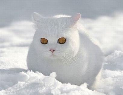 Покажите кота или котов которые перебираются через снег?