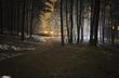 Ночь, зима, снег, свет фонарей сквозь ветви деревьев...
