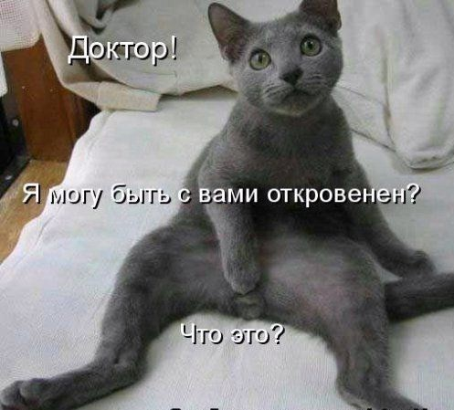 Kāda ir kaķa mīļākā poza?