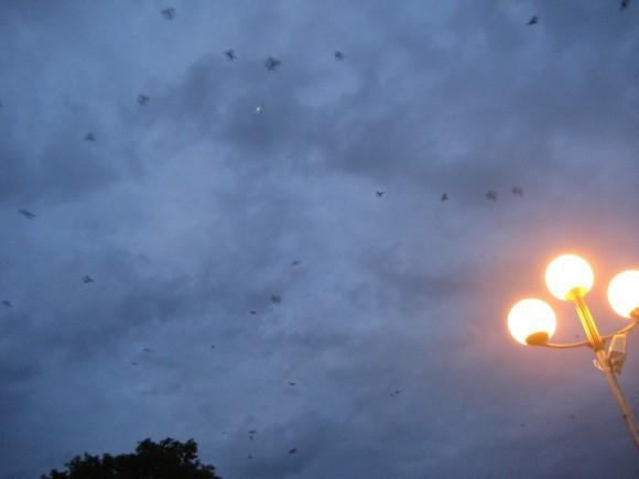 Покажите низко летящих ласточек?