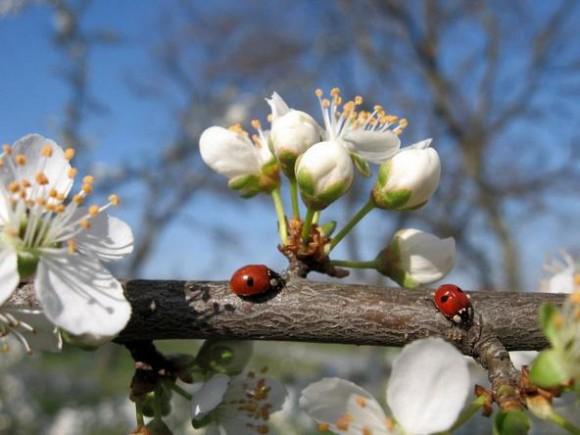 Покажите весну?