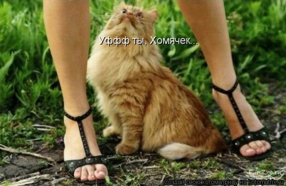 Мартовский кот, какой он?