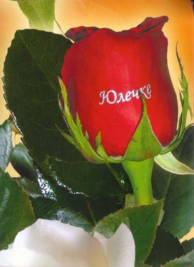 Поздравление на имя розы 413