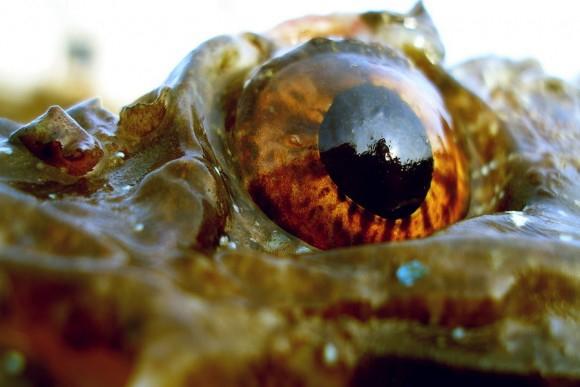 Какие у Вас глаза когда какаете?
