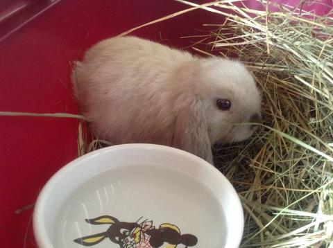 ;3 zajka