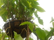 Попугай в Ботаническом саду.