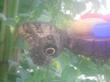 Бабочка в Ботаническом саду.