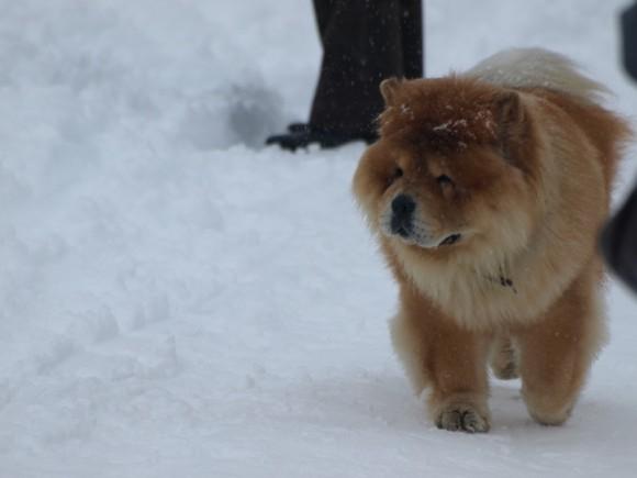 Какой породы собаки вам нравятся!?