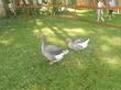 Мини зоо в парке Пикник.