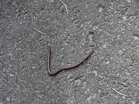 сначала я подумала ,что это червяк...