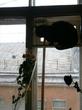 Питер, кот Проша и вид на крышу соседнего дома..