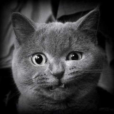 Покажите смешного Котэ?