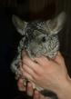 наглое и вредное маленькое животное :)