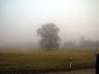 Обожаю гулять в туманную погоду
