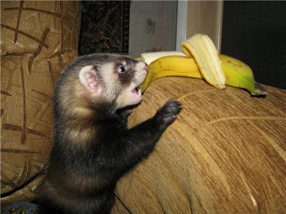 Можете щас сфоткаться с фруктом или овощем?