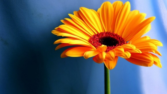 Твои любимые цветы?