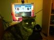 кошка помогает в сведение музыки