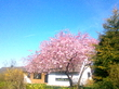 Весна, блин...