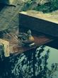 Ответ на лебедя форгета :) Утка в течении
