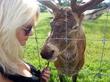 В мире животных :)