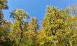 Осень :3
