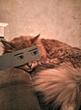 что я творю с котом :3