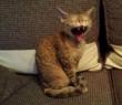 Кот стрэссует у друзей дома