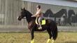 Новый конь)