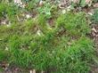 Первая трава