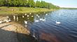 Лебединый берег