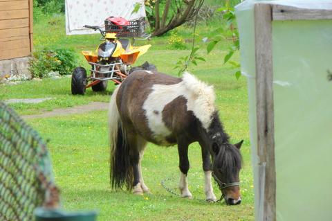 А пони - тоже кони