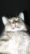 Сфоткал свою кошку как учил гугл :D