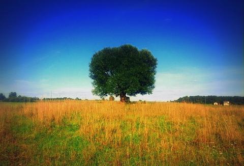 Спанч Боб реинкарнировался в дерево.