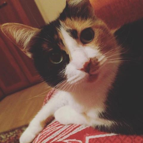 А у кого на ирце самый красивый котейка? Показывайте