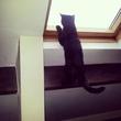 мой кот Модест