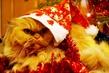 просто она обожает праздники :)