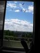 Окно, летнее :))
